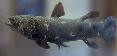 Fish - Wikipedia