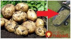 Táto záhradkárka zo susedných Čiech sa podelila o svoju perfektnú vychytávku pri pestovaní zemiakov. Nielen, že zemiaky nemusíte sadiť do zeme, ale môžete perfektne zužitkovať odpad z vašej záhrady. Zemiaky na určené na sadenie totiž stačí vložiť do trávy, ktorá zvýšila z kosenia z vašej záhrady. Navyše, takýmto spôsobom môžete dopestovať bohatú úrodu aj vtedy,...