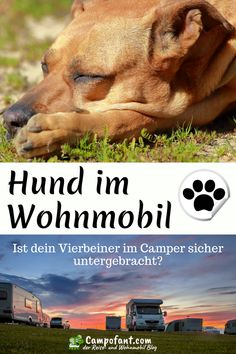 Transport and secure dogs in the camper - Camping Tipps & Infos - Hunde Dog Playground, Dog Travel, Real Friends, Shelter Dogs, Camping Ideas, Four Legged, Van Life, Dog Love, Dog Training