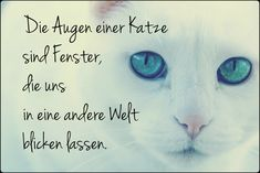 Cats say eyes Soul Quotes, Feeling Happy, Maine Coon, Inner Peace, Cats And Kittens, Need To Know, Dog Cat, Eyes, Sayings