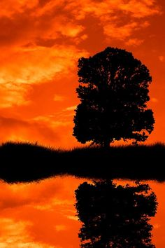 Silouette & reflection of tree against orange sky