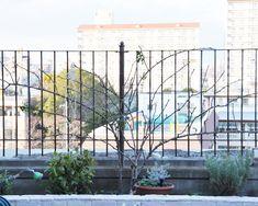 年末恒例の作業、つるバラ誘引 | はなはなショップブログ Outdoor Structures, Rose, Plants, Pink, Roses, Planters, Plant, Planting, Pink Roses