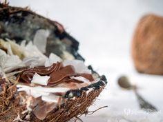 Coconut rice pudding / arroz con leche de coco