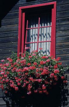 Austrian window box.