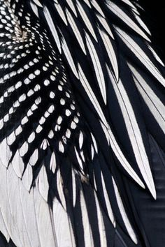 Monochrome Feather Textures - natural surface pattern inspiration for bird inspired design; black & white feathers