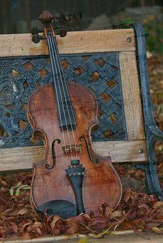 Beautiful violin