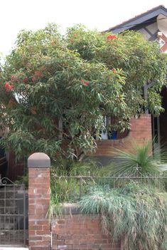 Striking small inner city front garden