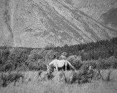 Art Photography IN THE SAGEBRUSH 8x10 horse by ApplesAndOats, $25.00