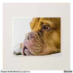 Shop Dogue de Bordeaux Jigsaw Puzzle created by pdphoto. Bordeaux Dog, Pet Dogs, Pets, Make Your Own Puzzle, Custom Gift Boxes, Animal Skulls, High Quality Images, Pink And Green, Pitbulls