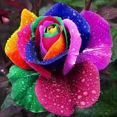 34 Melhores Imagens De Flores Lindas Gardens Wonderful Flowers E