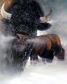 BUFFALO ~ BISON HEAD