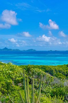 Petit St. Vincent in the Caribbean. How lush the greenery is and how blue the backdrop is. For the best of art, food, culture, travel, head to theculturetrip.com. Or click http://theculturetrip.com/caribbean/st-vincent/ for everything a traveller needs to know about St Vincent.