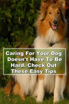 They say all dogs go to heaven, but that can be hard to believe when your pooch is acting out. If you're having trouble with your dog, you may be frustrated, and you may not know where to turn. The suggestions in this article will help you deal with your dog and appreciate its finer points.