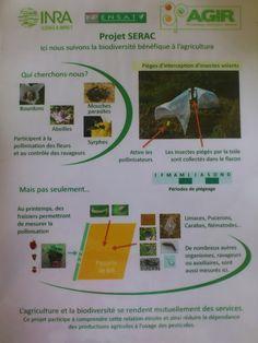 La ferme de Vanessa: Ma seule parcelle de blé... Avec le projet SERAC Parasite, Agriculture Biologique, Flying Insects, Flasks