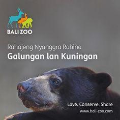 いいね!127件、コメント3件 ― Bali Zooさん(@balizoo)のInstagramアカウント: 「Rahajeng Rahina Galungan lan Kuningan,  wishing you inner peace and harmony in this festive day. Om…」