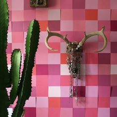 #pink - photo by apartmentf15©