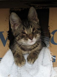 Homeless cat born without eyelids gets surgery, family