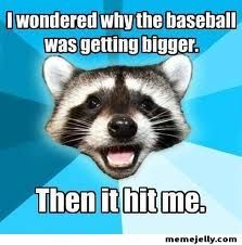 "Oh the ""Bad Pun Raccoon"" never disappoints."