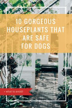 10 gorgeous #houseplants that are safe for #dogs and what to avoid!