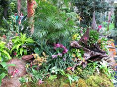 https://flic.kr/p/HmF45C | Orchids, Conservatory Display, Longwood Gardens IMG_7995 | Longwood Gardens, Kennett Square, PA USA Photograph by Roy Kelley Roy and Dolores Kelley Photographs