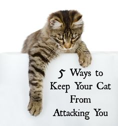 There are a lot of stories in the news about cats attacking their owners. Learn why this happens and you can avoid it in your home.
