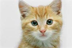 Kết quả hình ảnh cho kitten