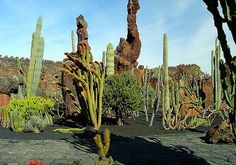 Cactus Garden - Lanzarote Desert Climate, Garden Leave, Seven Wonders, Stone Sculpture, Cactus Plants, Beautiful Gardens, Outdoor Spaces, Landscape, Gardening