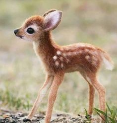 The 100 Cutest Animals Of All Time - List Inspire The 100 Cutest Animals Of All Time - List Inspire <br> All amazing animals from cute cats to adorable turtles. Here is The 100 Cutest Animals Of All Time for you to enjoy. Baby Animals Super Cute, Cute Wild Animals, Baby Animals Pictures, Cute Little Animals, Cute Animal Pictures, Cute Funny Animals, Animals Beautiful, Animals And Pets, Cute Cats