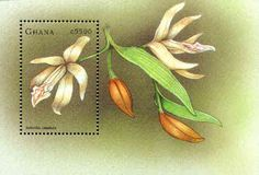 This webpage is dedicated to stamps which feature flowers from the tropical orchid genus Sobralia. It's part of the Sobralia Pages website, created by Nina Rach. Ghana, Valley Of Flowers, You Are The World, Flower Stamp, Postage Stamps, Cover Art, Orchids, Design Inspiration, Horticulture