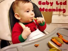 Tall Mom tiny baby: What Is Baby Led Weaning