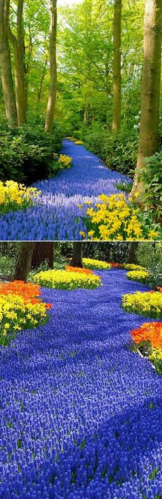 Holland's Flower #Garden - Lovelies, fancy a dash of spring daydreaming? If so, you should totally mark your calendars for late March and April as it's the perfect flower blooming time in Keukenhof Park. This European iconic gem is hidden just outside of Amsterdam.