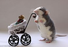 Photographer uses pet rats to create everyday human scenes   Daily ...