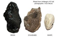 Ambergris perfume ingredient, Ambergris fragrance and essential oils