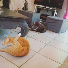 #интересное  Коты, удивляющие своей синхронностью (34 фото)   Предлагаем на миг оставить свои дела и немного расслабиться, взглянув на всеми любимых котиков. Особенность этой подборки в невероятной синхронности «моделей».        далее по ссылке http://playserver.net/?p=145900