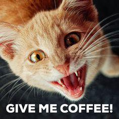 Me in the Morning when I'm in desperate need of coffee!!!
