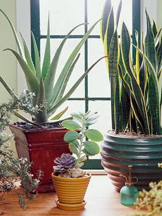 Houseplants for the Forgetful Gardener (great indoor plants that can take neglect)