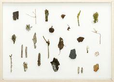 Herman de Vries, fragments, 2010, 50 x 70 cm via Galerie Conrads