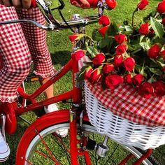 bike and basket`