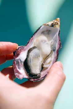 Oysters of Japan: Hunting for Hidden Pearls in Hiroshima Bay — In A Half Shell Best Oysters, Spinach Nutrition Facts, Asian Soup, Steamed Buns, Food Stall, Vietnamese Recipes, Korean Food, Food Plating, Street Food