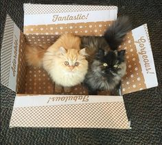 Cats in a box - credit to: swipurr.com