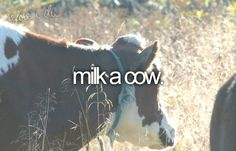 I have always wanted to milk a cow!