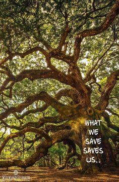 What we save, saves us.. WILD WOMAN SISTERHOODॐ #WildWomanSisterhood #wildwomen…