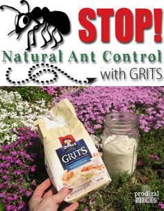 Stop the Ants! Natural Ant Control Using a Grocery Store Found Item: GRITS by Prodigal Pieces www.prodigalpieces.com #prodigalpieces