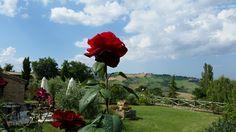 sempre le belle rose... le amo!!!!! ahhh e la vista panoramica