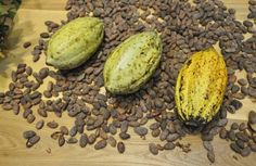Cocoa for Better Mood, Health and Beautiful Look