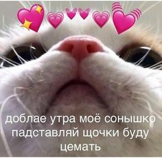 Pets Cats Baby Kittens - Welcome OyunRet Funny Cats, Funny Animals, Cute Animals, Baby Kittens, Kittens Cutest, Chat Bizarre, Cat Memes, Funny Memes, Freaky Memes