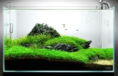 Layout 59 - James Starr-Marshall - Tropica Aquarium Plants
