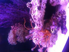 New 72 bowfront reef tank