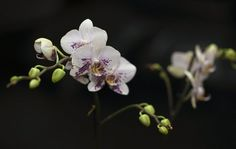 Orchids are some of my favorite flowers.
