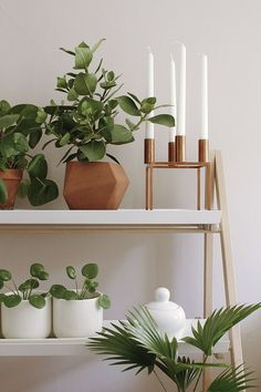 Warm tones and white pots